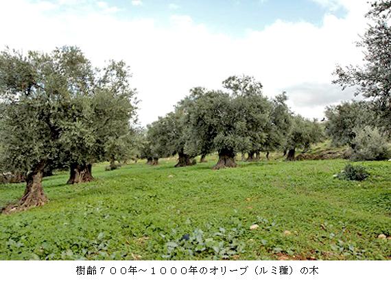 blog140306-5.jpg
